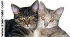 2badcats logo